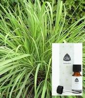 Chi Lemongrass cultivar Cymbopogon citratus 10ml