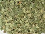 Berkenblad gesneden - Betula pendula