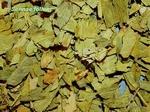 Sennablad gesneden - Cassia angustifolia